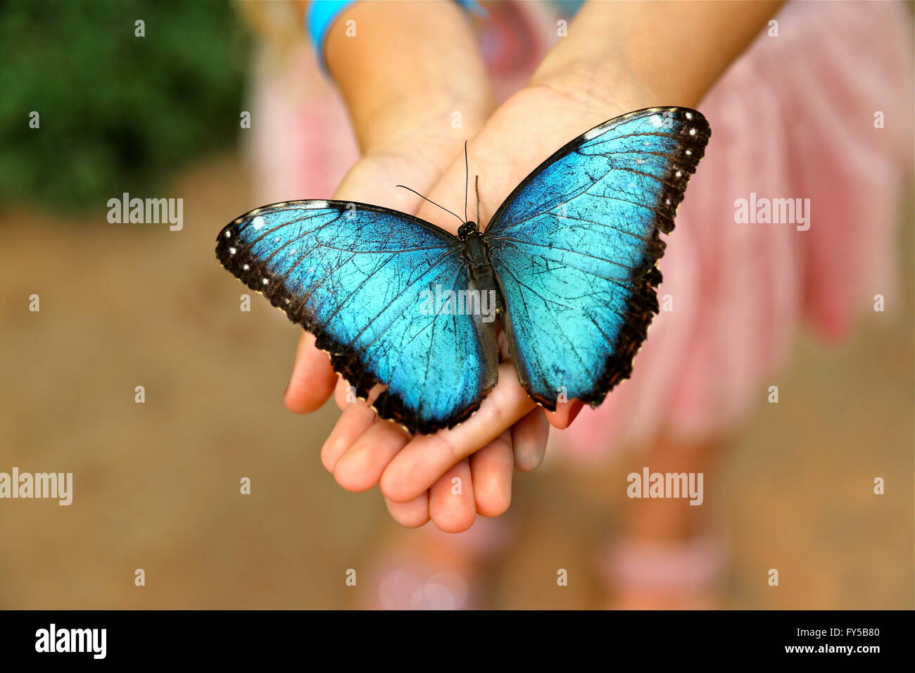 Uncategorized Butterfly Hand butterfly in hands stock photos images blue morpho girls image
