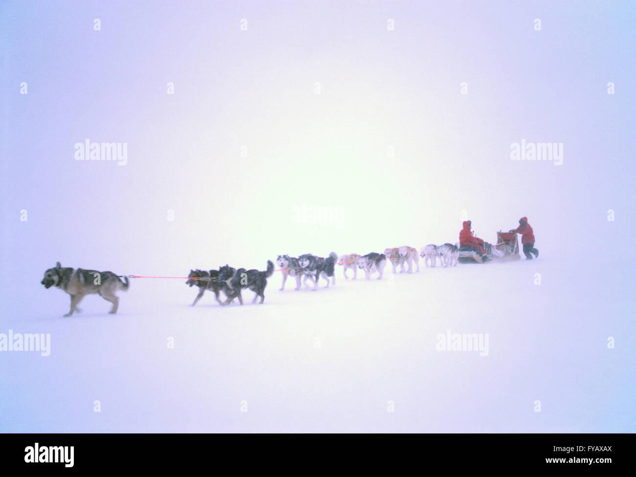 eskimo dog team stock photos u0026 eskimo dog team stock images alamy