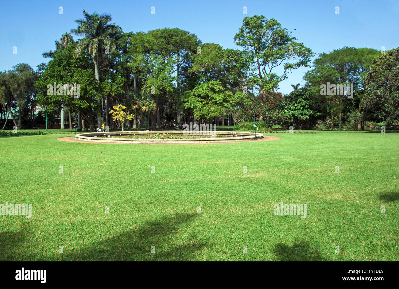 Green Lawn And Pond And Trees Against Tree Skyline In Botanical Garden  Landscape