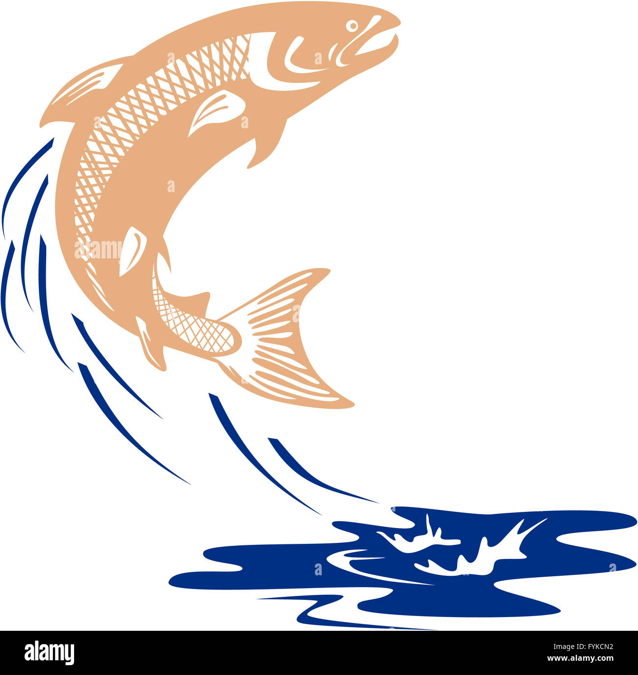 Freshwater fish jumping - Atlantic Salmon Fish Jumping Water Isolated