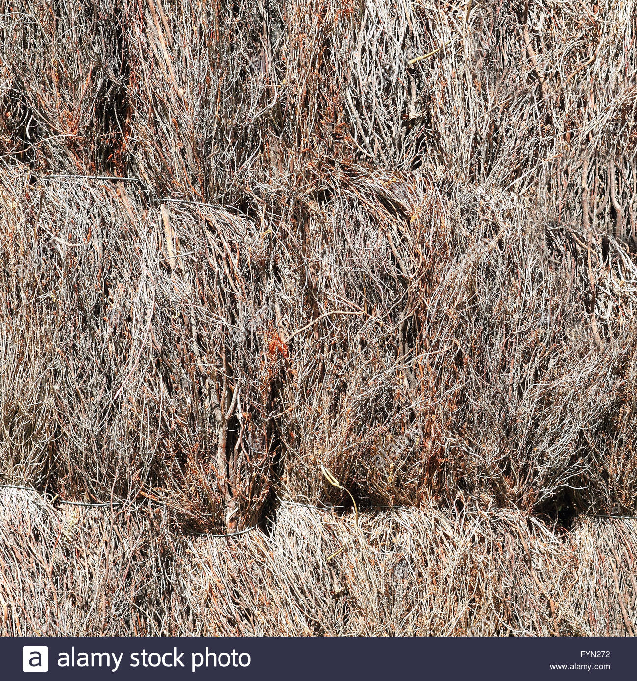 A fence of mon heather Stock Royalty Free Image