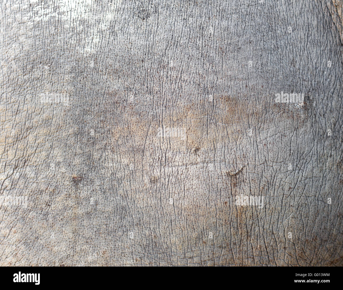 rhino skin texture rhino skin texture Stock Photo, Royalty ...