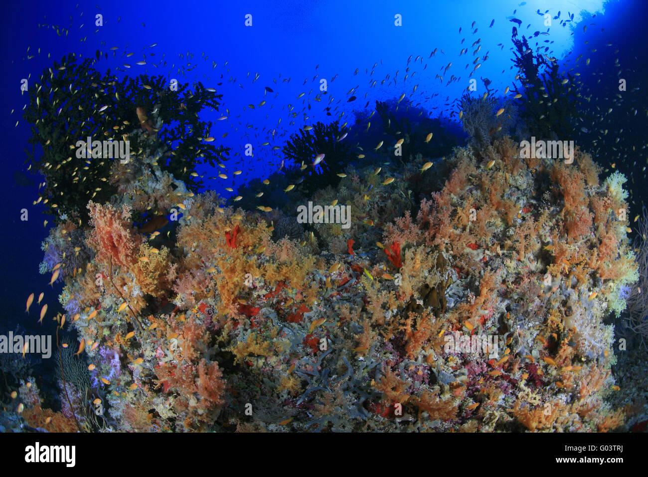 Groß Malvorlagen Von Korallenriffen Zeitgenössisch - Framing ...