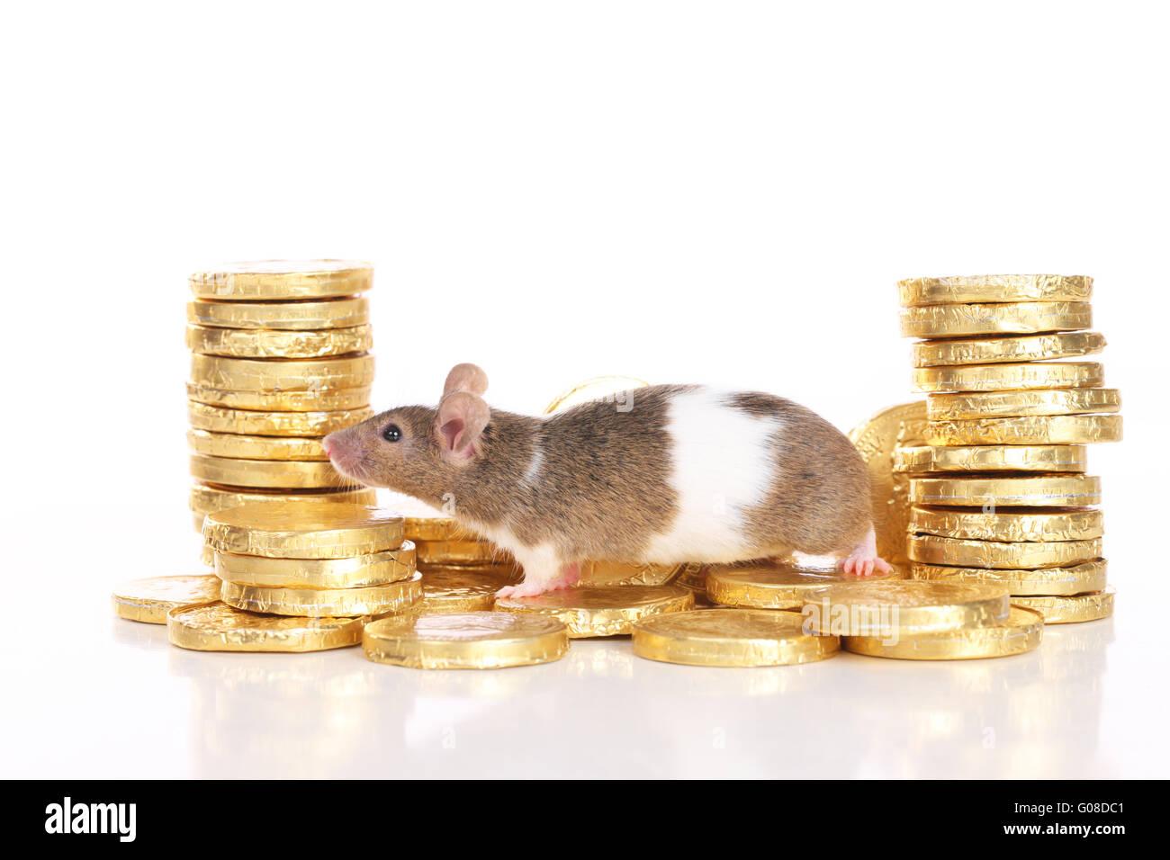 Gold Mouse Pet
