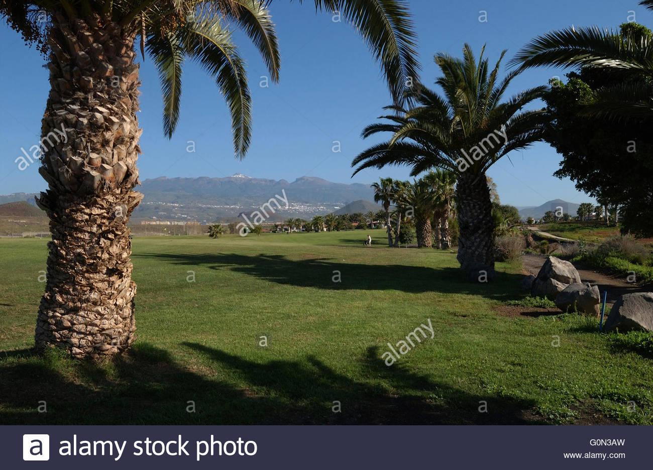 amarilla golf course tenerife