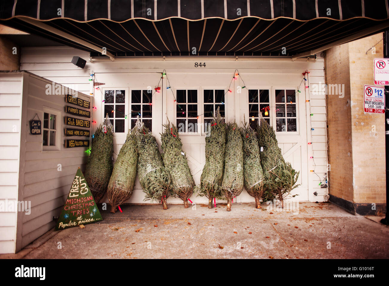Fresh Cut Christmas Trees for Sale on street with vintage signage ...