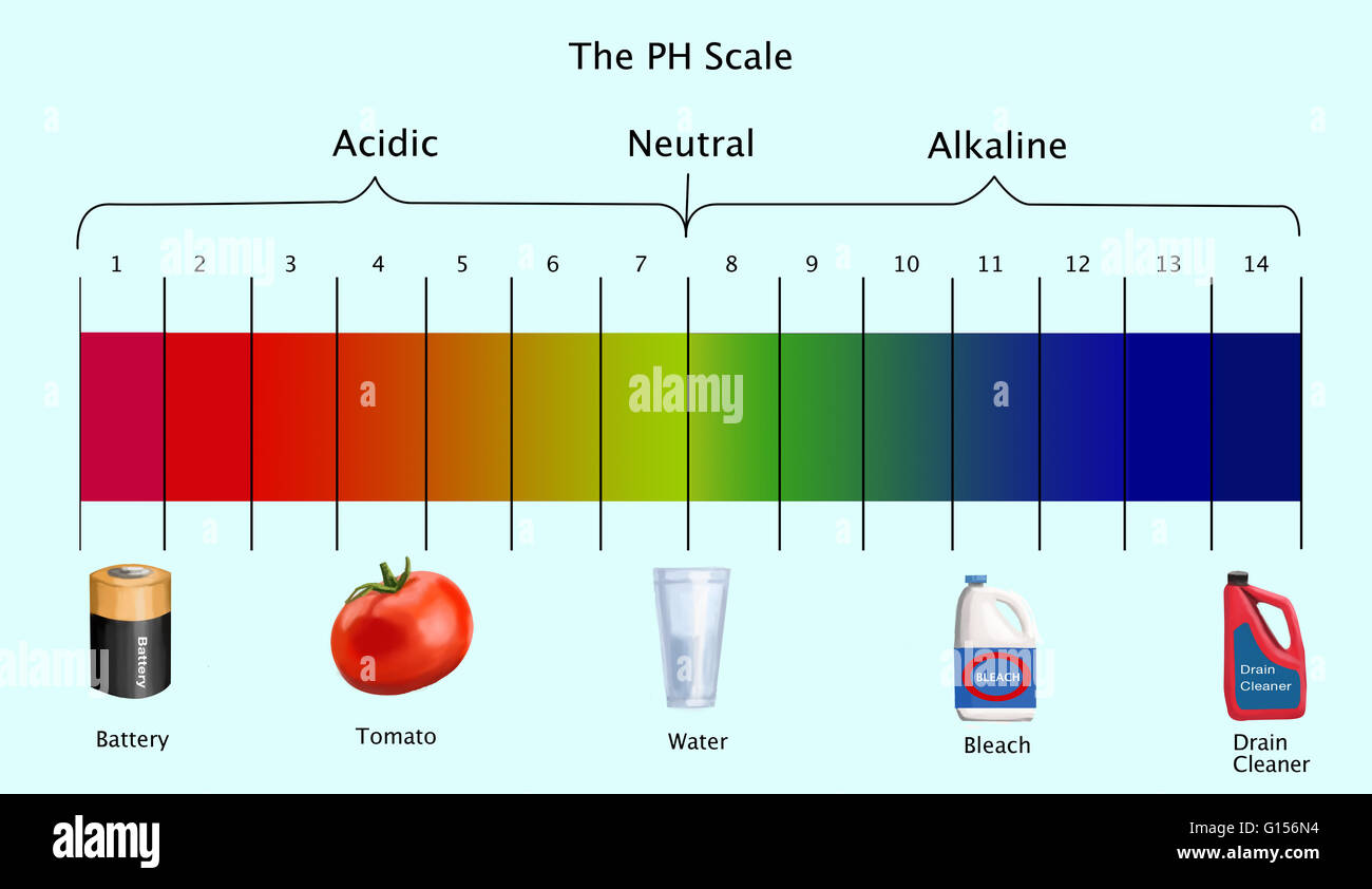 Ph Scale With Examples Images