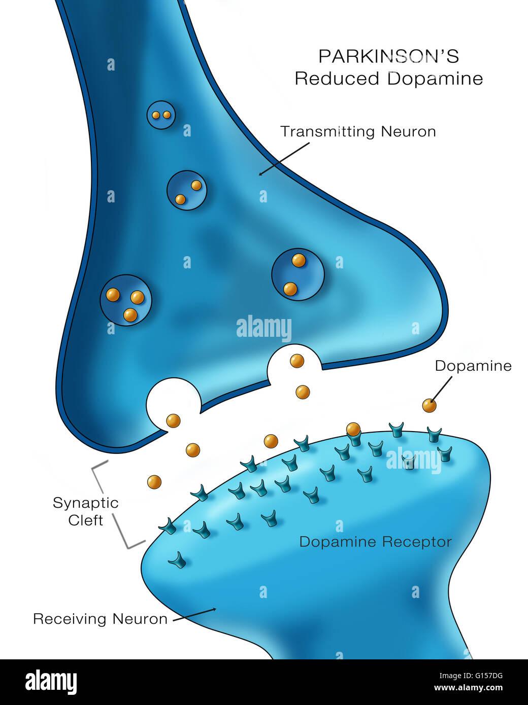 download Clinical Neuroanatomy