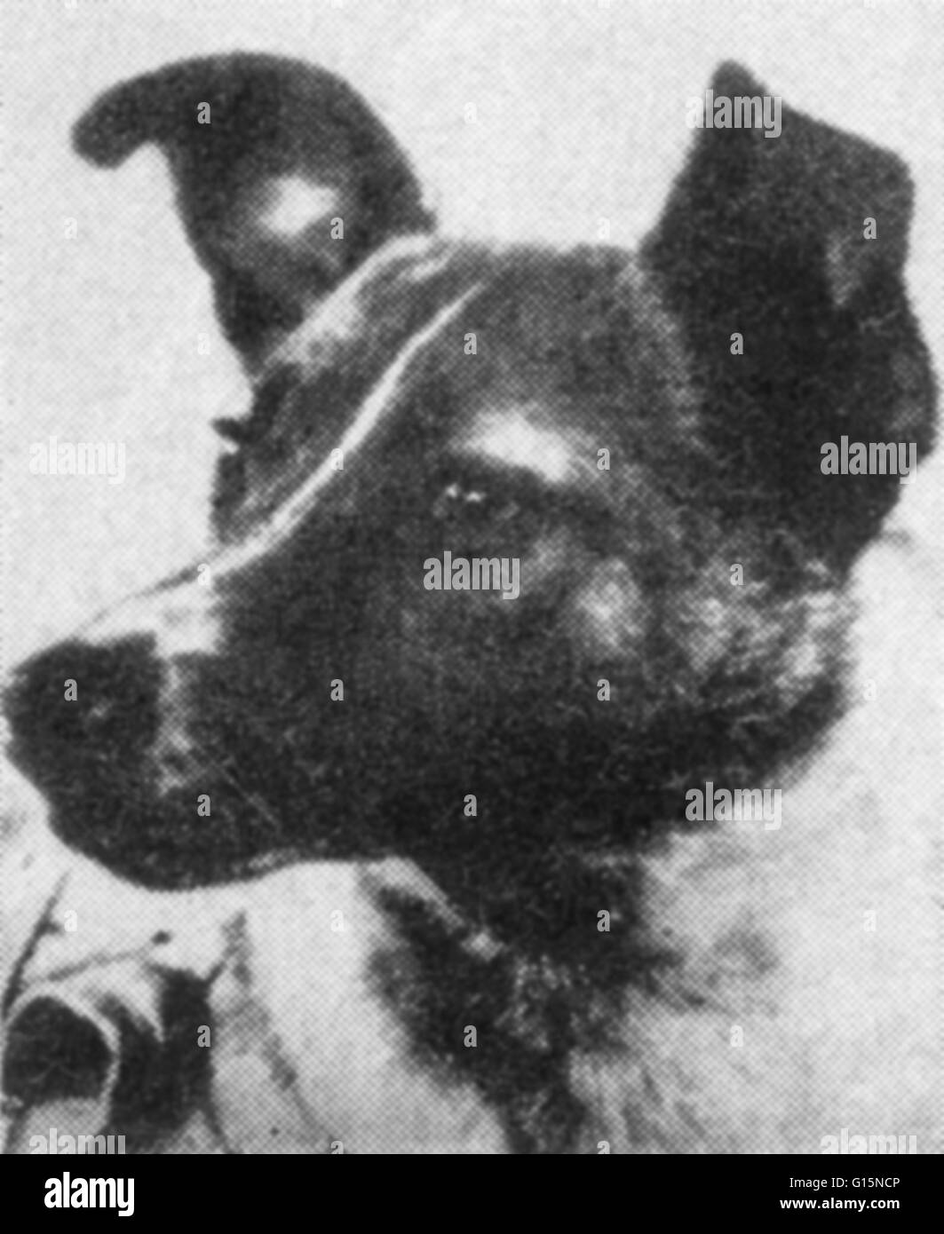 first animal in space laika - photo #19