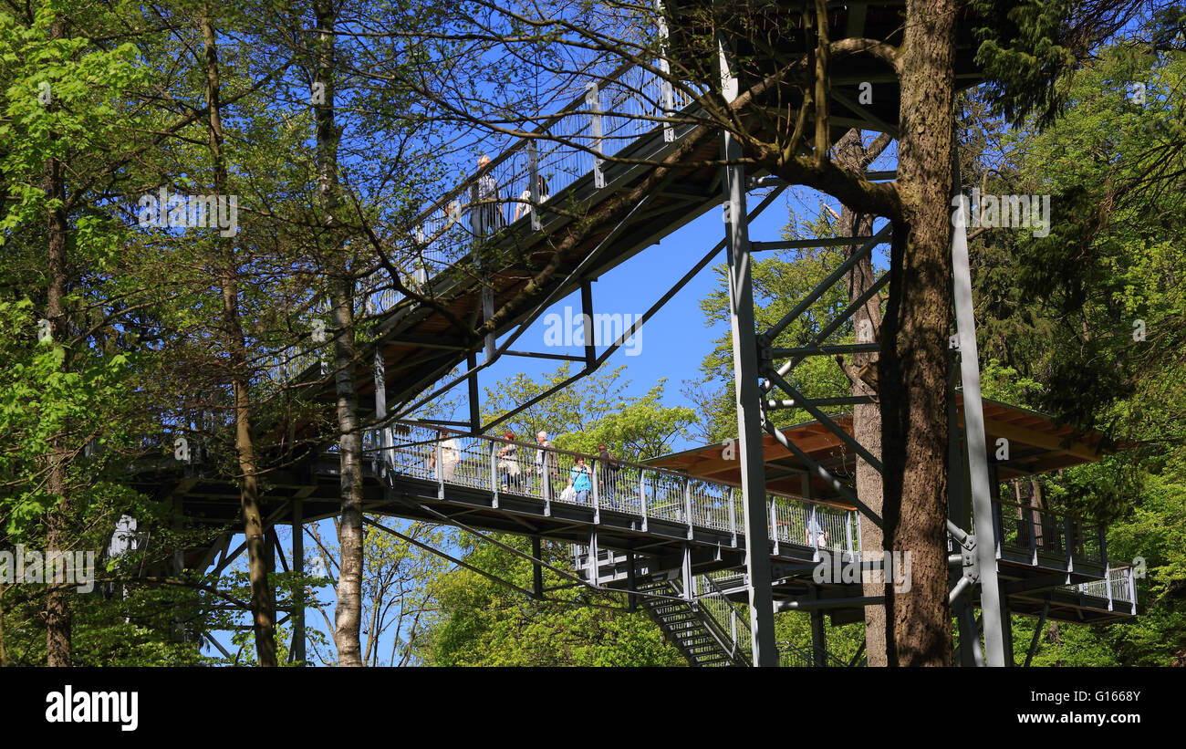tourists hike on the treetop path in the harz national park in bad, Hause ideen