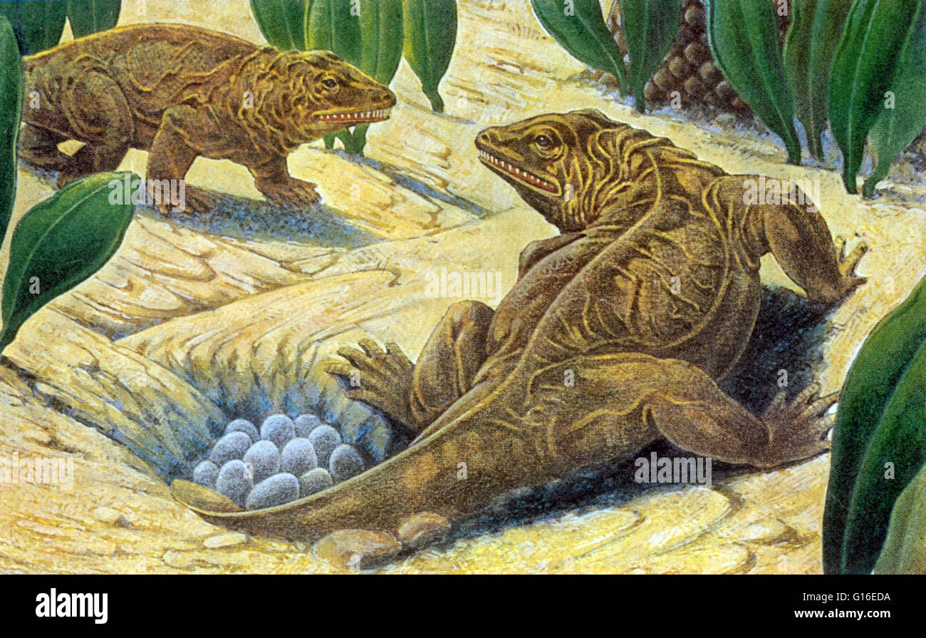 seymouria was a reptilelike labyrinthodont extinct
