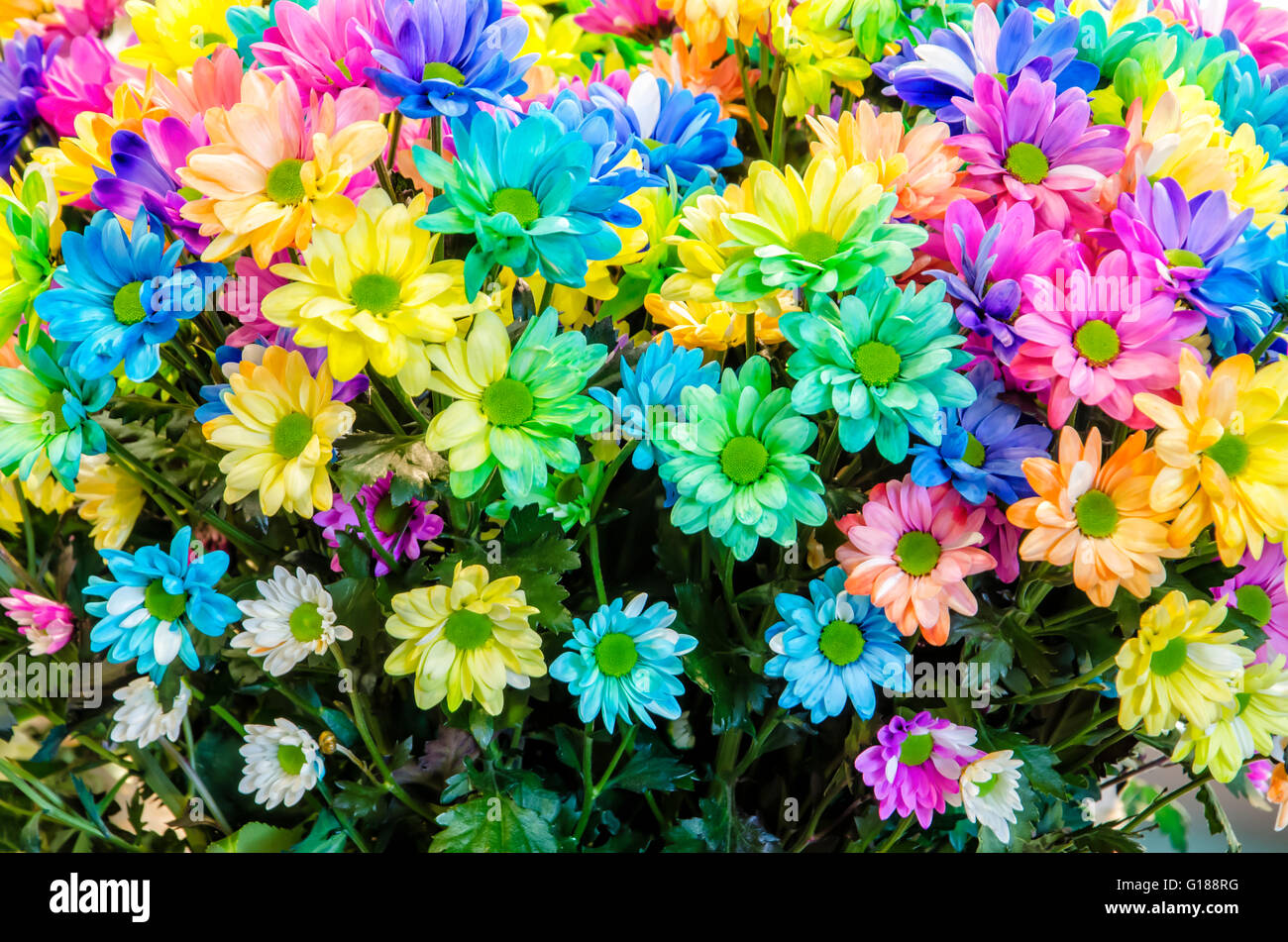 Multi-colored flowers. Beautiful bouquet of colored ...