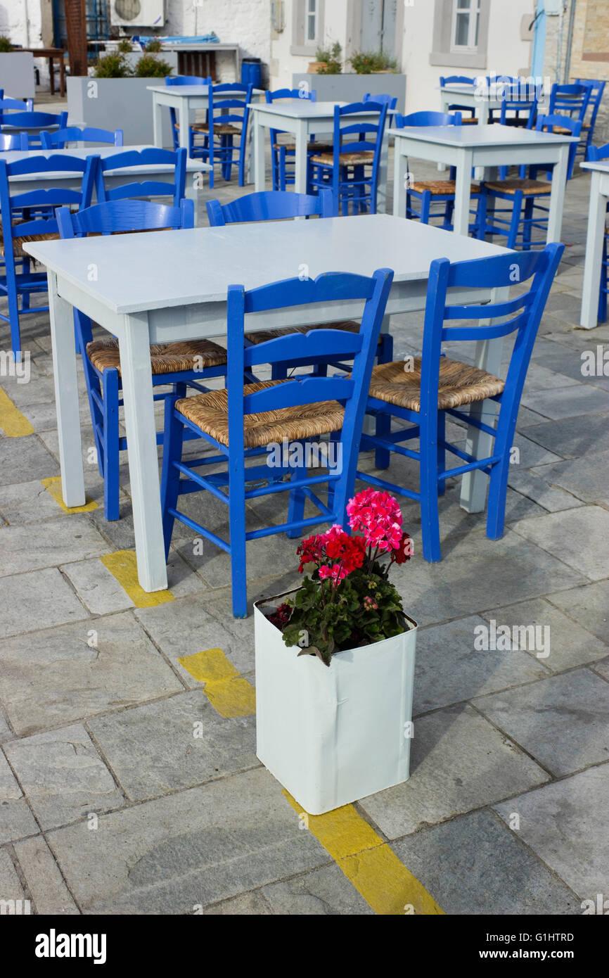 pelargonium (geraniaceae) plant decorating the rows of cyan stock