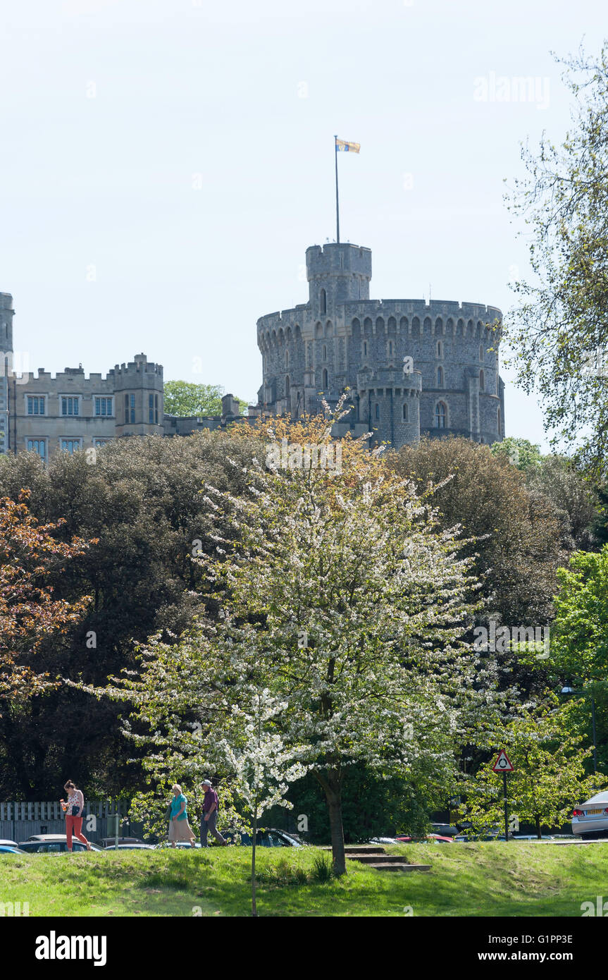 Tower Of Windsor Castle From Home Park Berkshire England United Kingdom