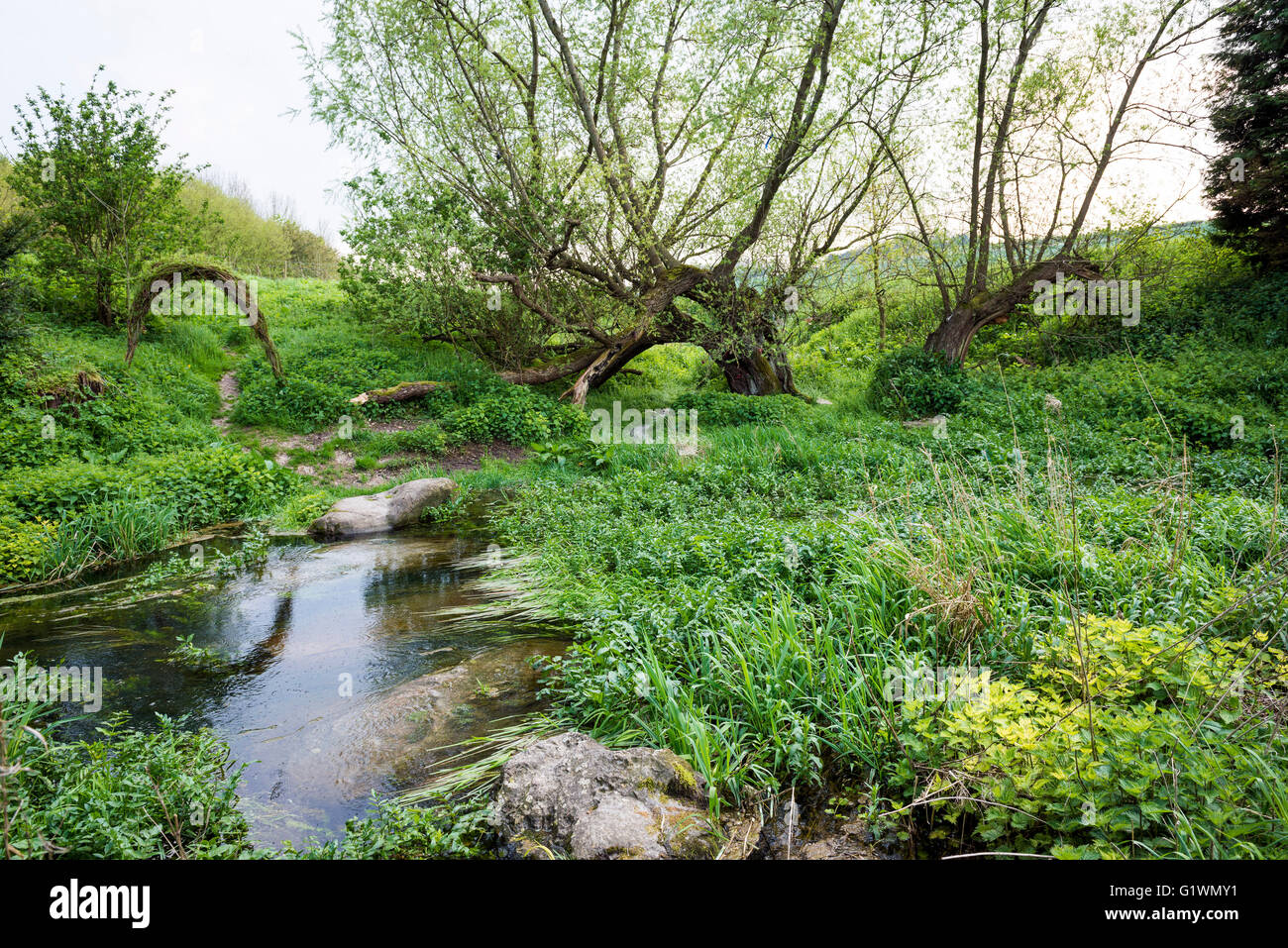 The beginning of the River Kennet at it's source at ...