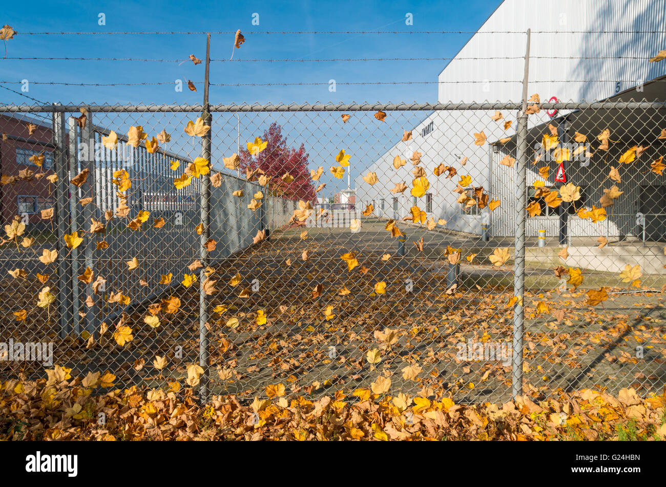lots of autumn leaves caught on a wire fence Stock Photo, Royalty ...
