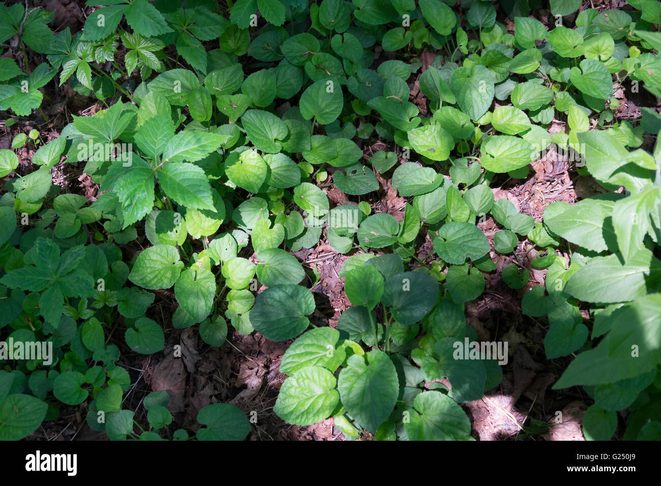 A Pattern Of Green Plants Growing On The Forest Floor In