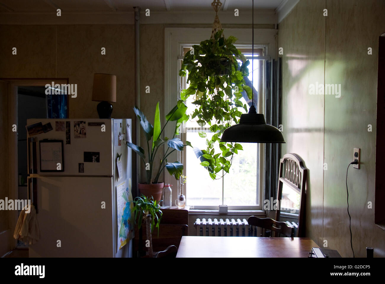 Kitchen window for plants - Kitchen With Refrigerator Next To Large Window And Hanging Plants