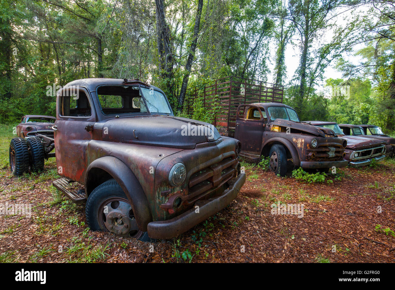 old rusted abandoned cars and trucks in crawfordville florida stock photo royalty free image. Black Bedroom Furniture Sets. Home Design Ideas