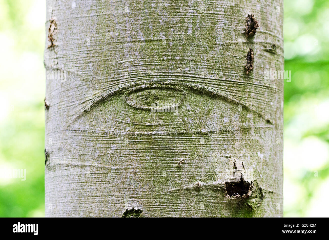 All seeing eye of god on a tree bark also called eye of all seeing eye of god on a tree bark also called eye of providence symbol for the eye of god watching over mankind buycottarizona