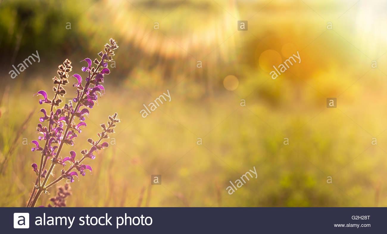 Free banner images for website - Springtime Nature Flower Website Banner