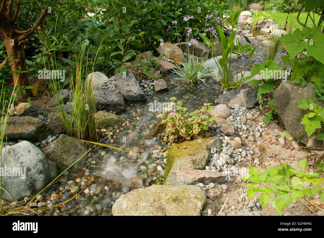 stream with various pond plants connecting two ponds in a