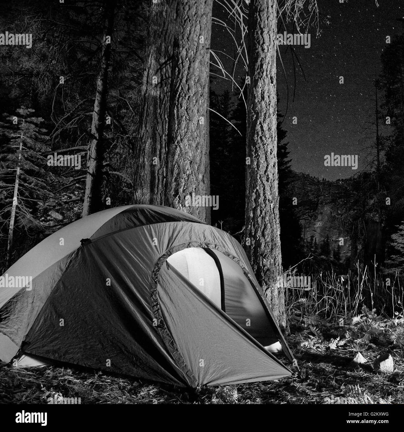 Tent in Forest at Night Yosemite National Park California USA & Tent in Forest at Night Yosemite National Park California USA ...