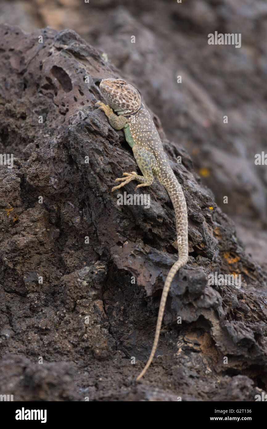 339 best REPTILES VARIADOS images on Pinterest
