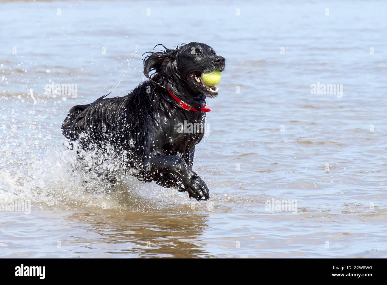 Ainsdale Beach Dog Friendly
