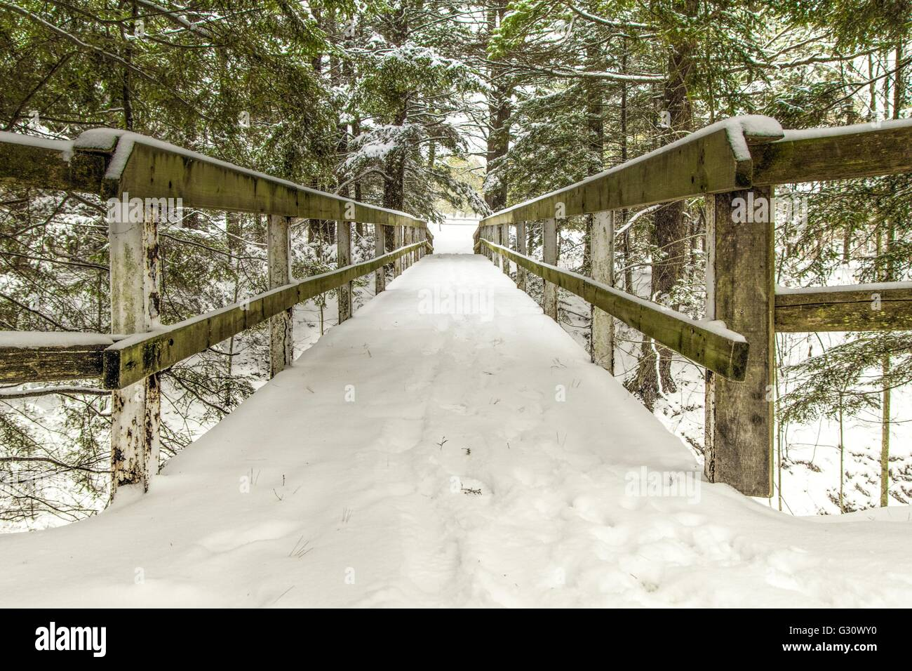 Winter Wonderland. Snow covered wooden bridge through the canopy of a winter forest & Winter Wonderland. Snow covered wooden bridge through the canopy ...