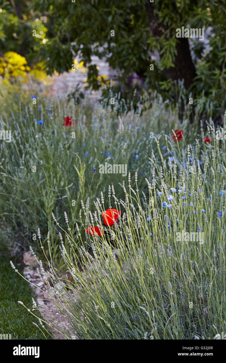 Chelsea Flower Show 2016 Designer Gardens James Basson The