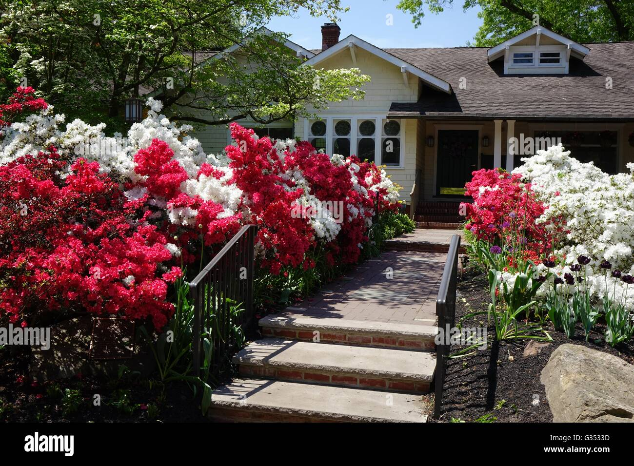 Azaleas Brighten The Front Of Sayen House In Sayen House And Gardens Park,  Hamilton, New Jersey, Mercer County
