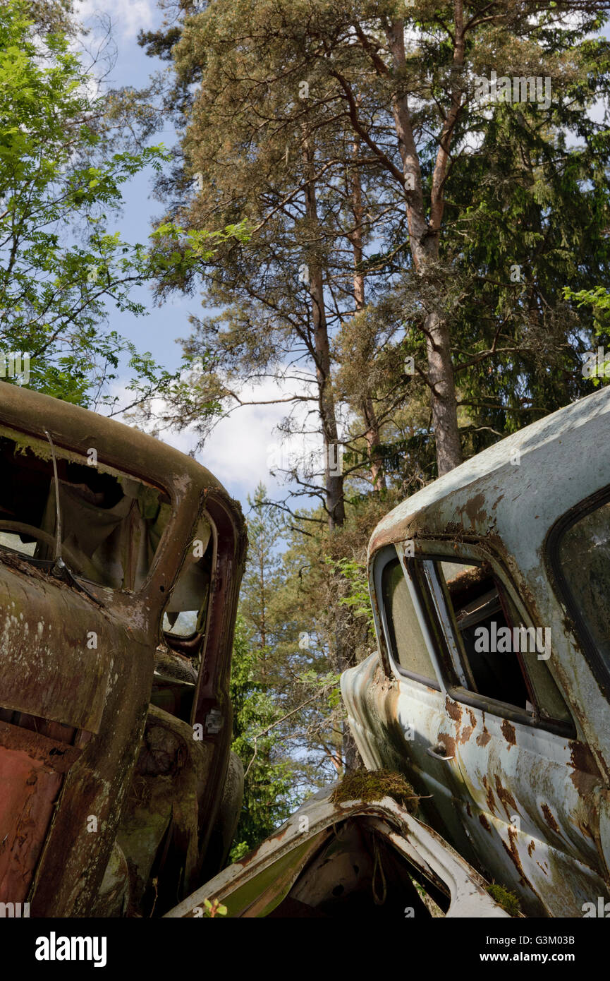 Cars at junkyard in nature setting, Sweden, Europe Stock Photo ...