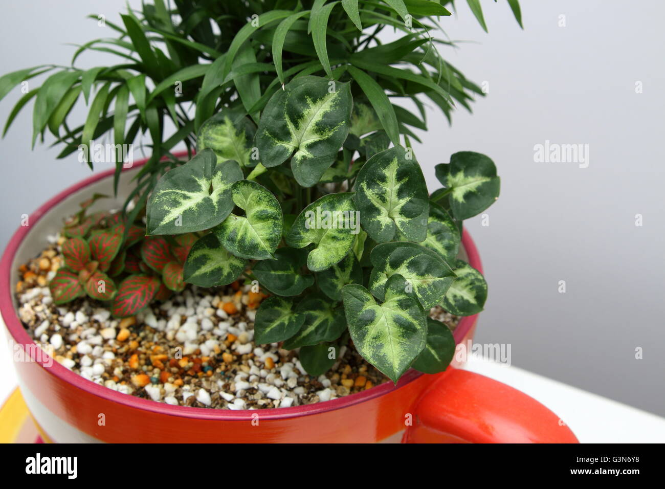 Vermiculite For Plants Close up Indoor...