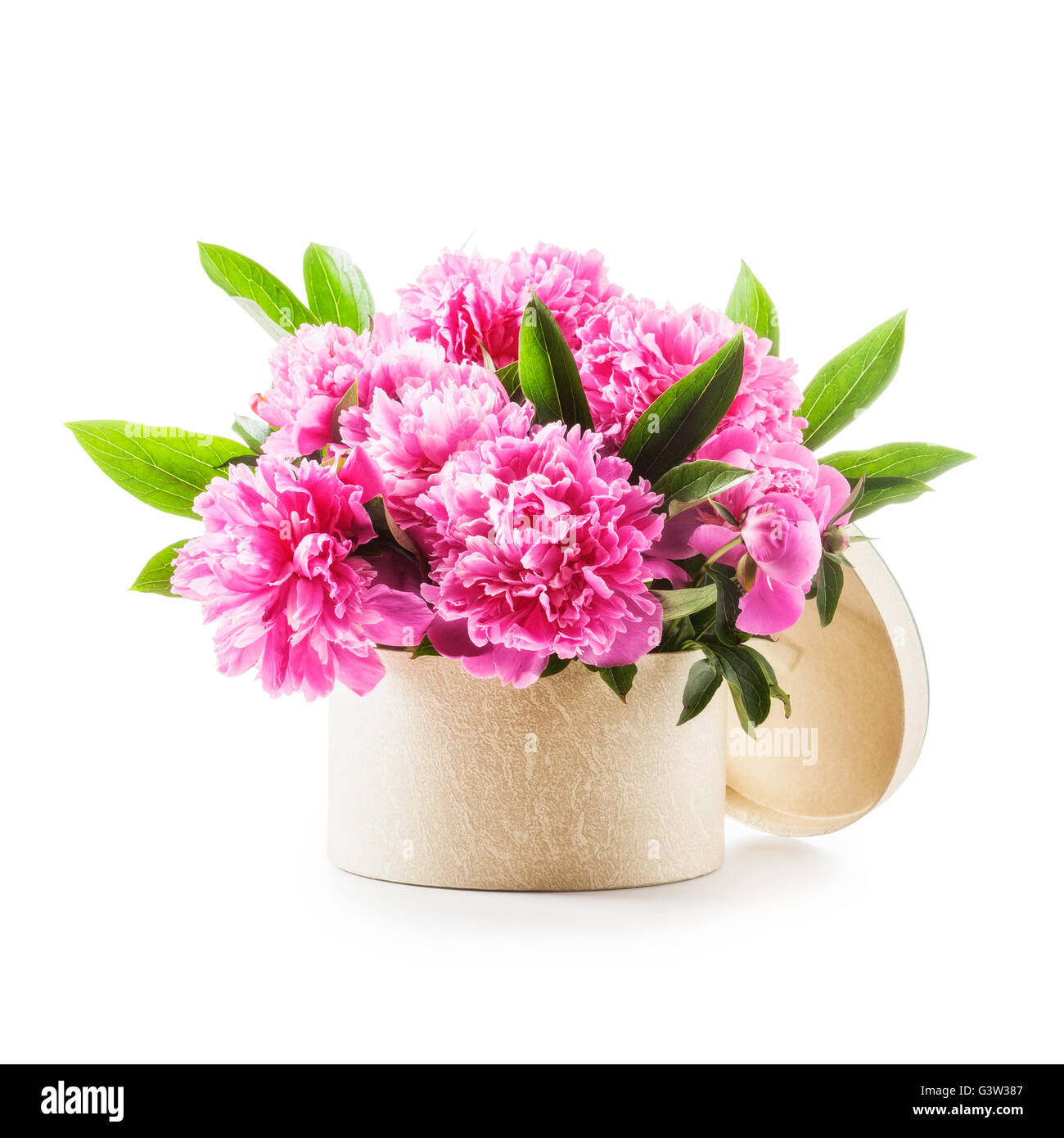 Peony flowers romantic bouquet of pink peonies in gift box peony flowers romantic bouquet of pink peonies in gift box isolated on white background clipping path included holiday present dhlflorist Images