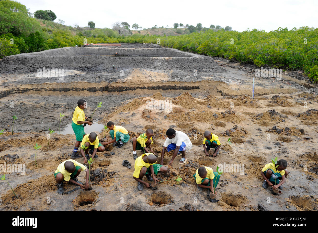 Kenya Mombasa , children plant mangrove during school excursion at ...