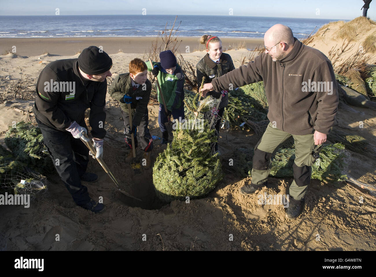 Donated Christmas trees to fight erosion Stock Photo, Royalty Free ...