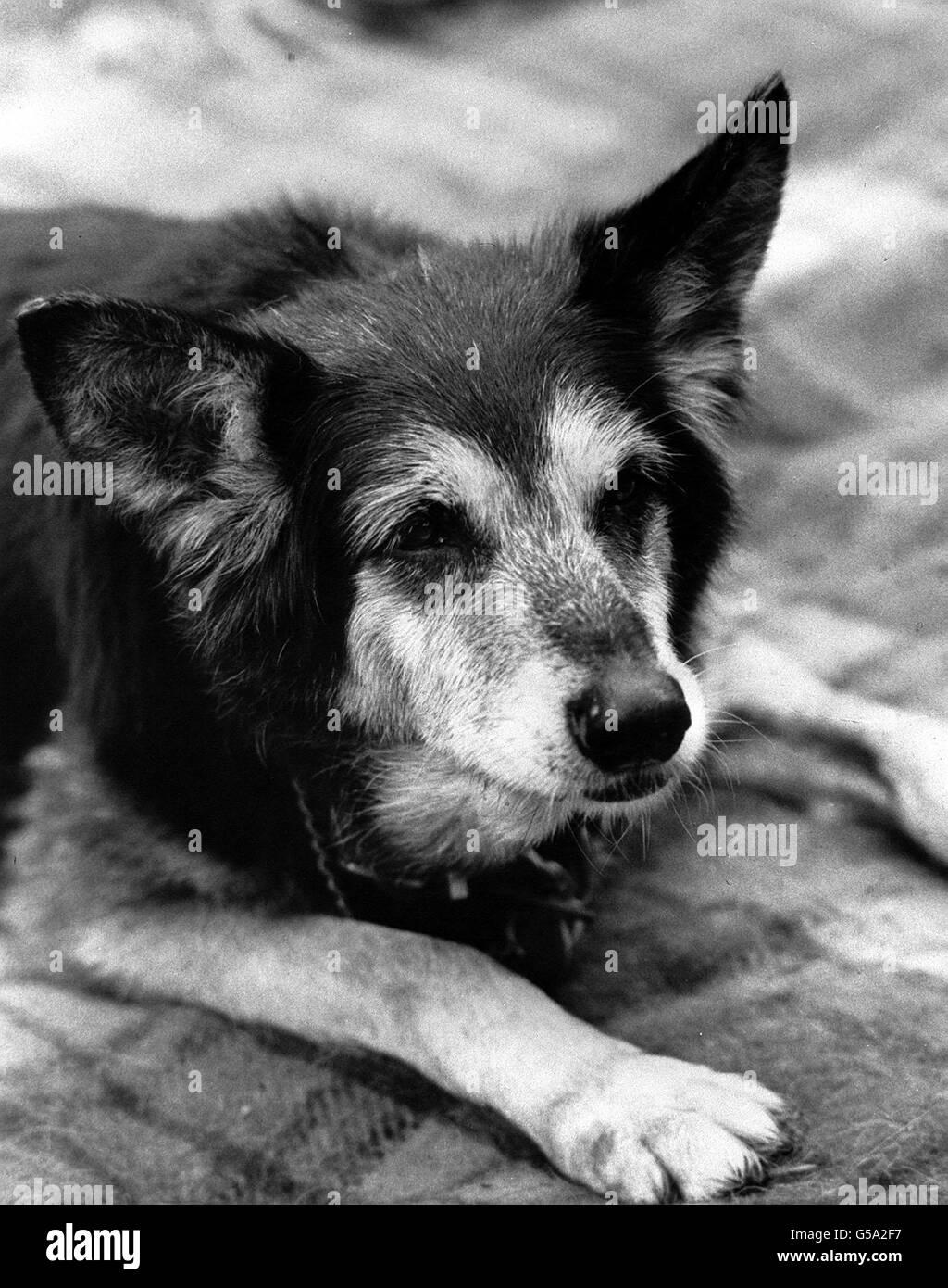 Petra Blue Peter Dog