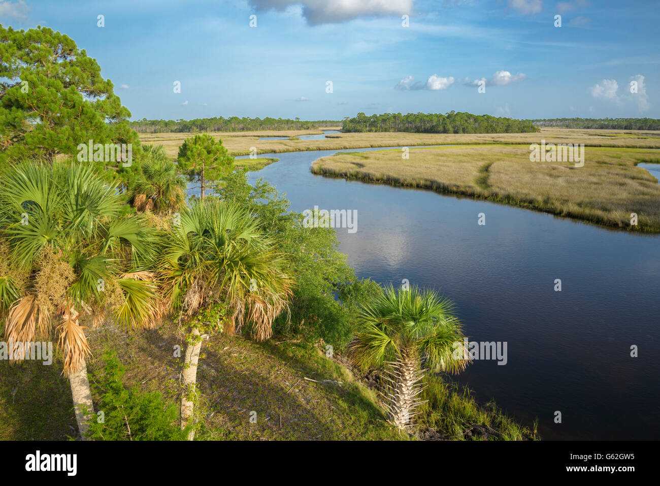Salt marsh lining fish creek big bend seagrasses aquatic for Fish creek florida