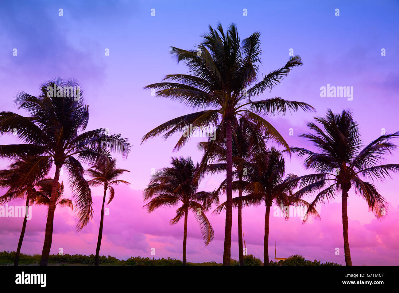 beach sunset with palm trees. miami beach south sunset palm trees in ocean drive florida with