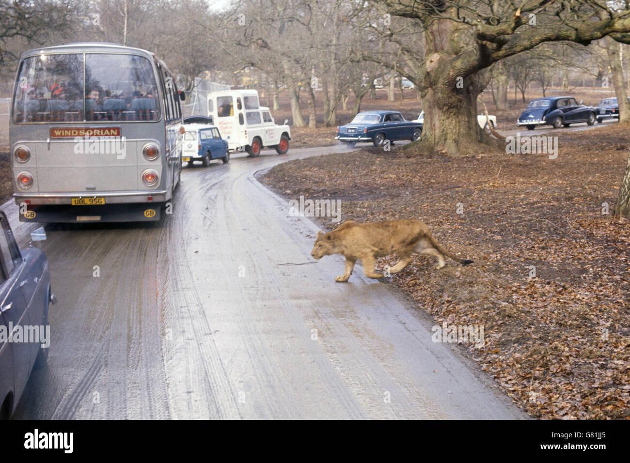 Safari Drive-Through - West Midland Safari & Leisure Park
