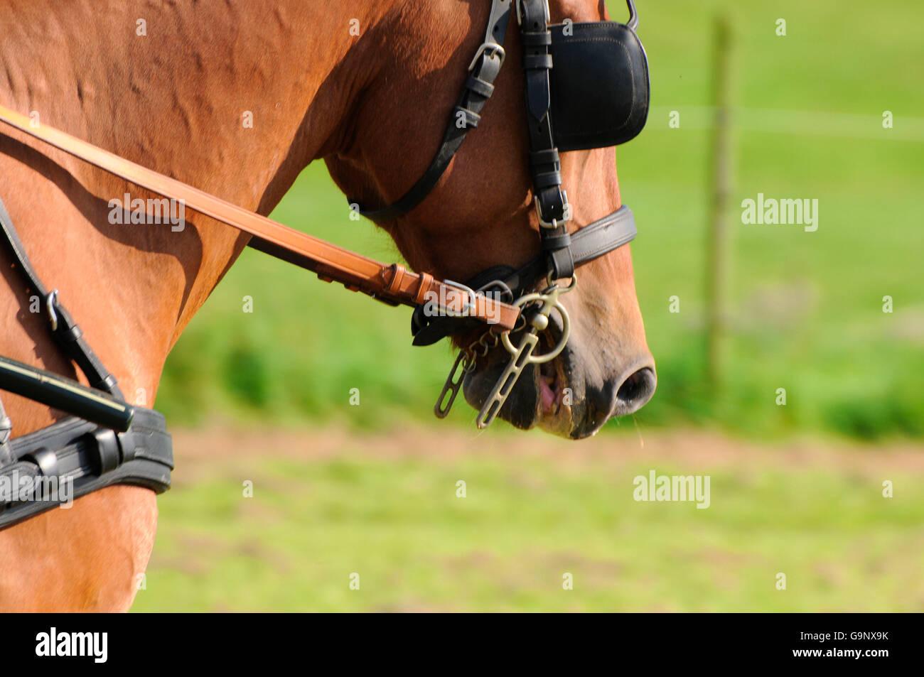 Amazoncom horse blinkers