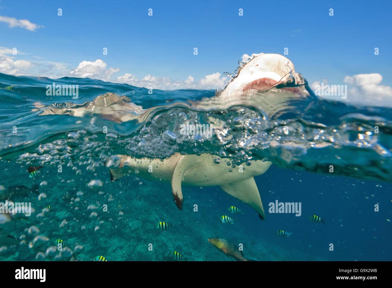 black tip shark bite - photo #16
