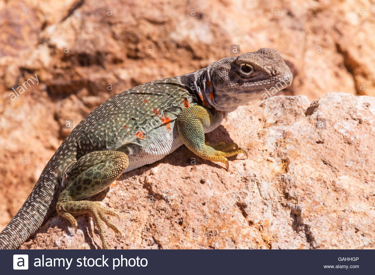581 best Reptiles images on Pinterest