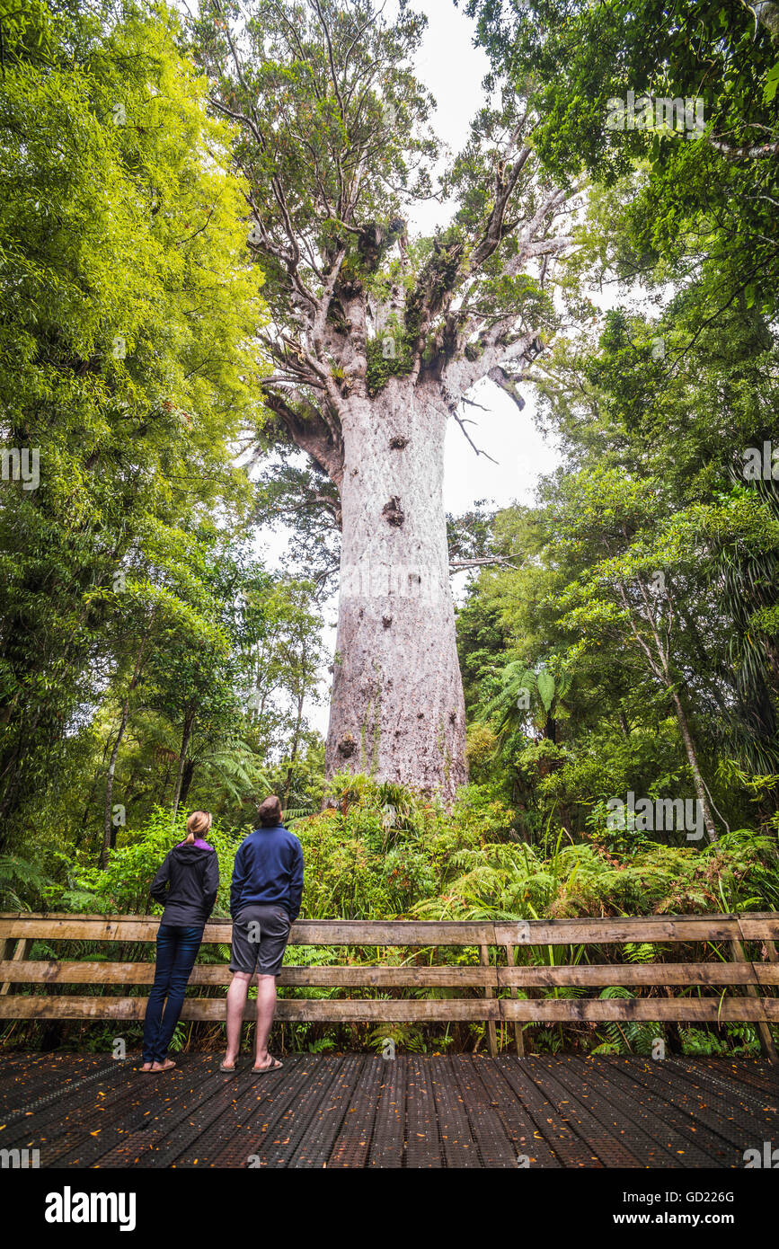 New Zealand North Island Forest