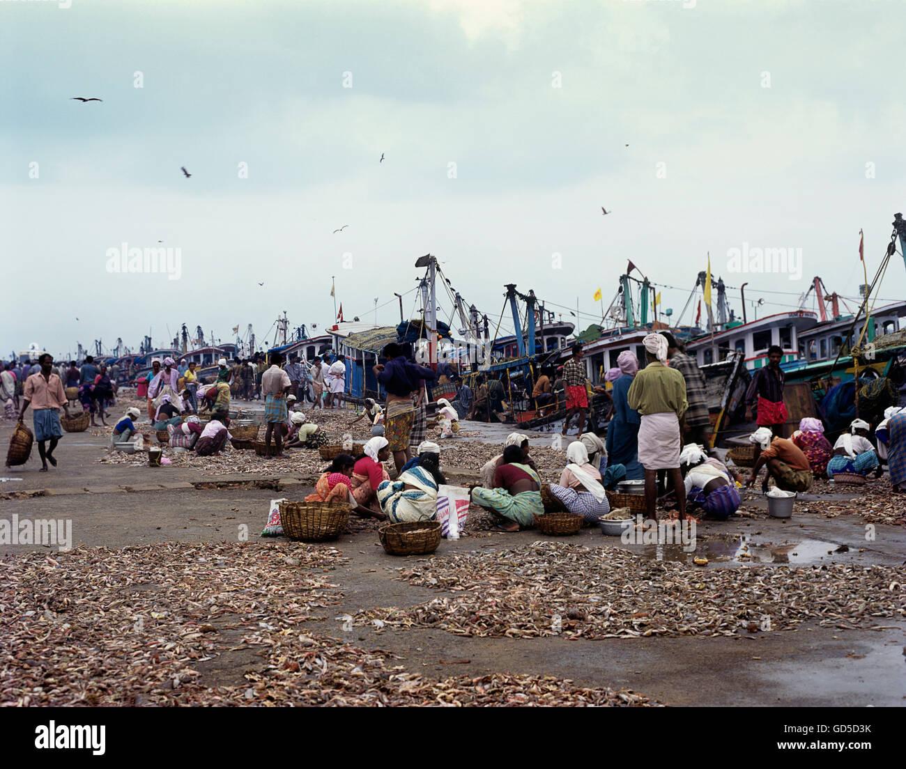 Ashtamudi Lake: Quilon Stock Photo, Royalty Free Image: 111372791