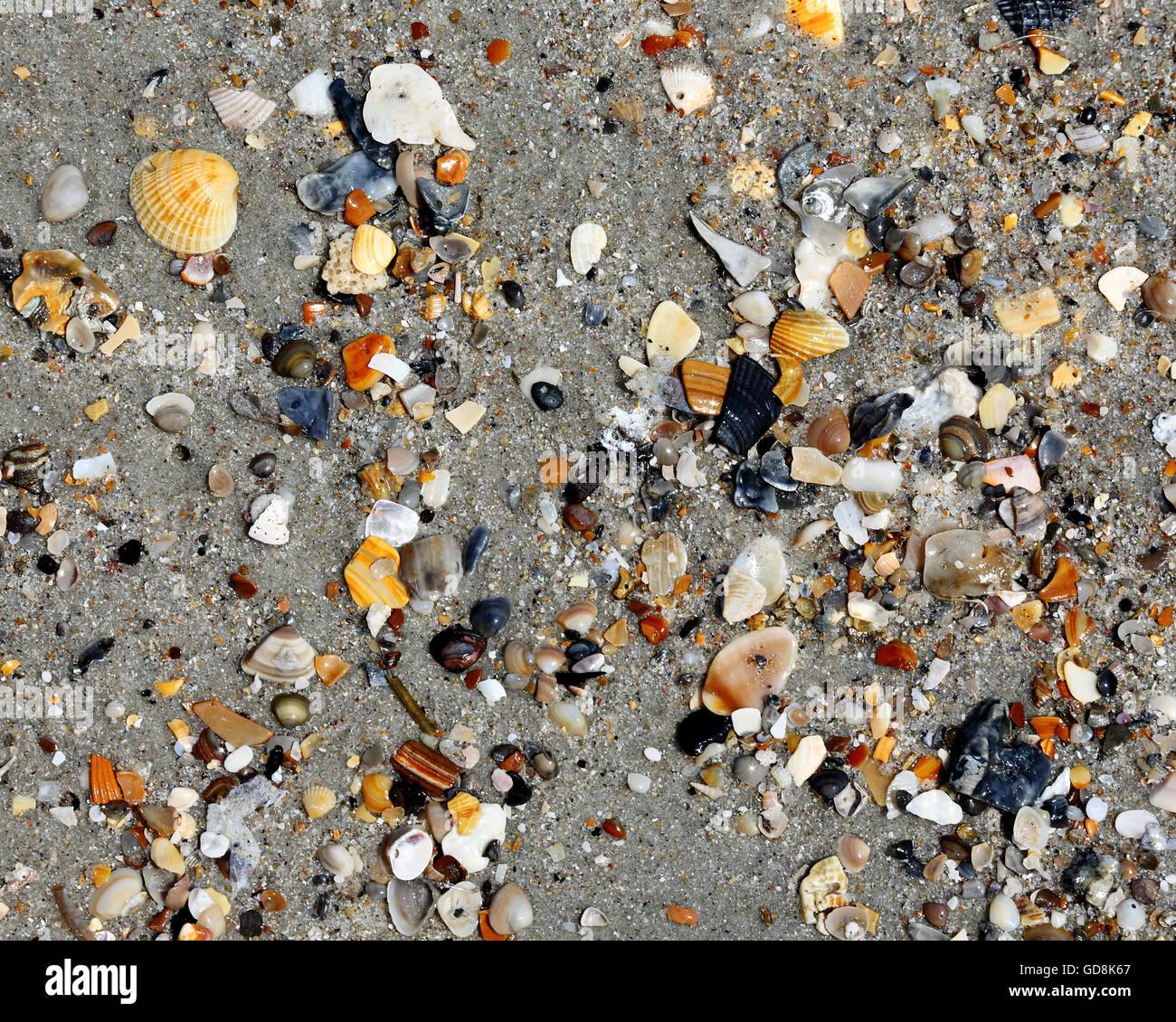 assorted small broken seashells on sand stock photo royalty