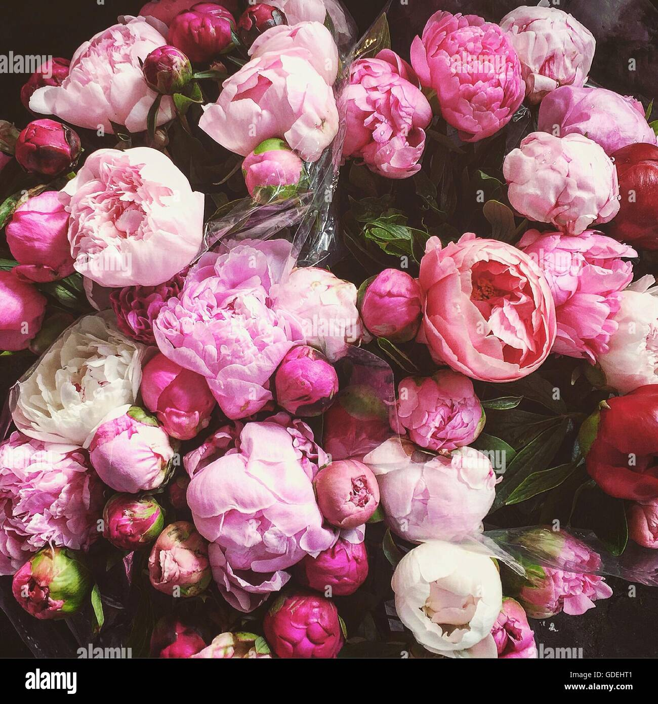 Close up of bouquet of pink peony flowers stock photo royalty close up of bouquet of pink peony flowers dhlflorist Images