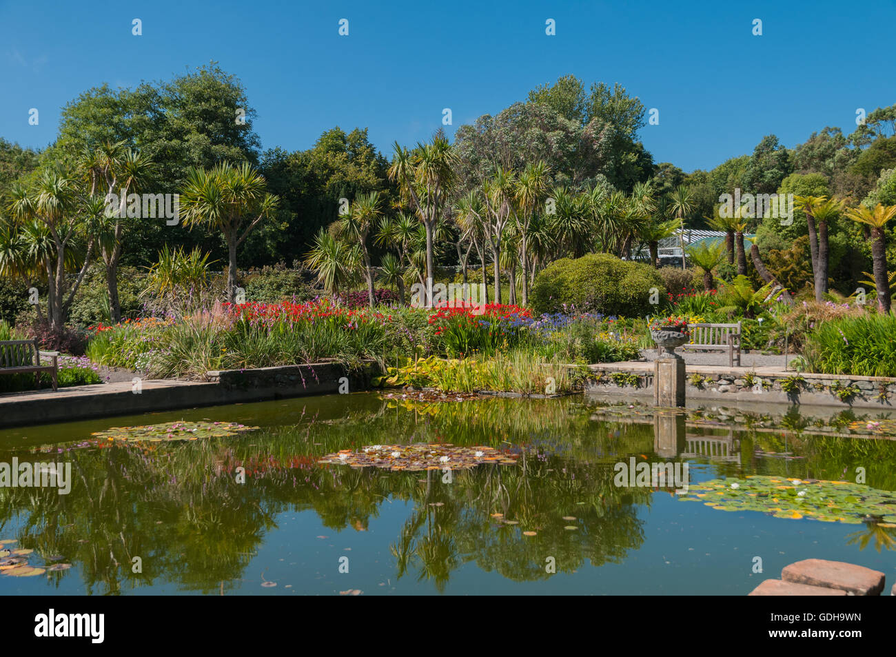 Mesmerizing Lily Pond With Palm Trees And Flowers Logan Botanic Garden Port  With Magnificent Lily Pond With Palm Trees And Flowers Logan Botanic Garden Port Logan  Dumfries  Galloway Scotland With Delectable White Garden Bench Also Sinclair Gardens Investments In Addition Garden Centre Hungerford And Gardener From Desperate Housewives As Well As Image Of Garden Hoe Additionally Garden Plant Sale From Alamycom With   Magnificent Lily Pond With Palm Trees And Flowers Logan Botanic Garden Port  With Delectable Lily Pond With Palm Trees And Flowers Logan Botanic Garden Port Logan  Dumfries  Galloway Scotland And Mesmerizing White Garden Bench Also Sinclair Gardens Investments In Addition Garden Centre Hungerford From Alamycom