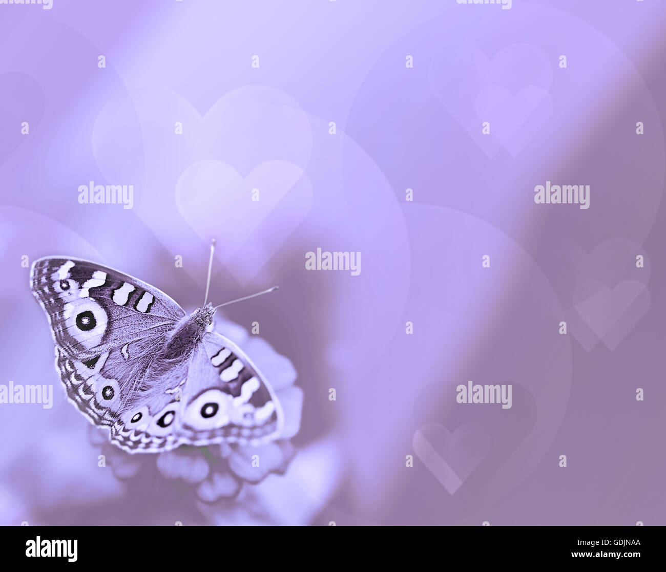 Butterfly with hearts on purple background for sympathy and symbol butterfly with hearts on purple background for sympathy and symbol of life hope soul and resurrection buycottarizona Images